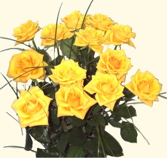Yellow roses of Texas[1].jpg