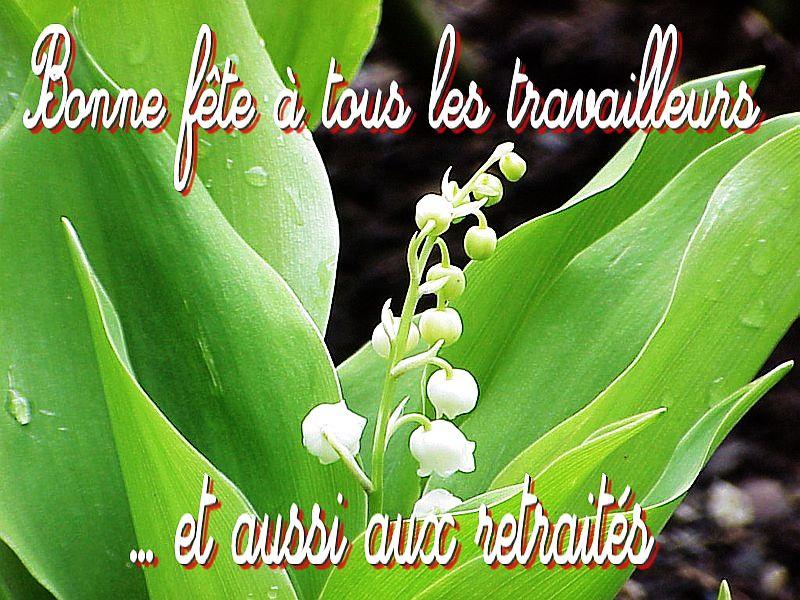 Le fil du partage  - Page 16 File.php?48,file=206987,filename=muguet_symbole_de_l_Ete_et_de_la_fete_du_travail
