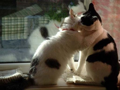 chats bisous.d.JPG