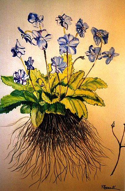 fleurs deracinees.1.jpg