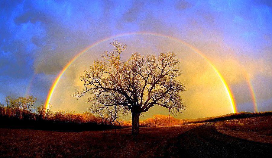 Arc en ciel , arbre de l\'amitie.Ets hahayim, l\'arbre de nos racines intrinseques, symbole de notre genealogie communale.jpg