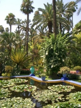 jardin-plante-.jpg
