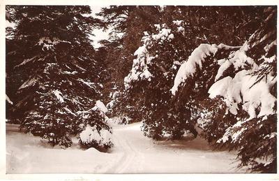 ifrane ss la neige.jpg