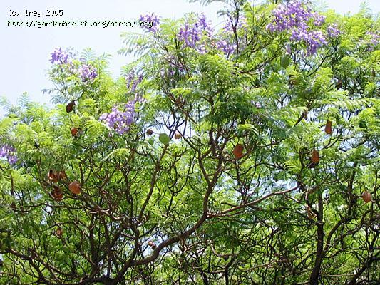Les fleurs les plantes et les arbres du maroc for Arbres plantes fleurs