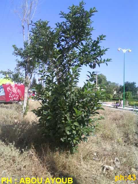 Chauffage climatisation maroc fleurs et plantes for Conseils en jardinage