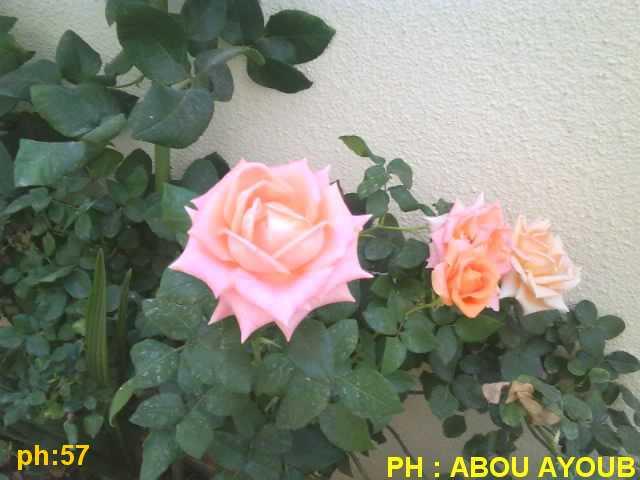 Photo 0843.jpg