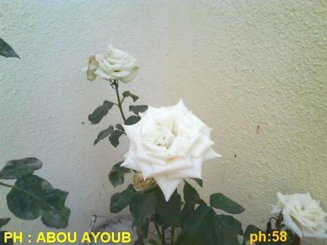 Photo 0844.jpg