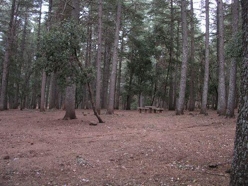 Cédes-forêt.jpg