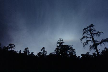 Cédres-la-nuit10.10.09.jpg
