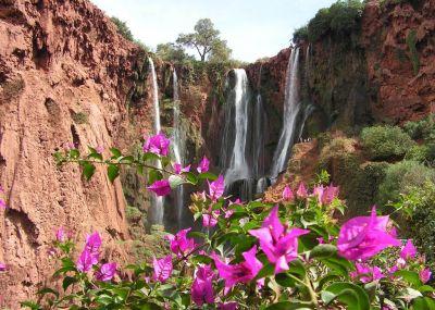 Fleurs aux cascades d\'Ouzoud Galerie photo.jpg