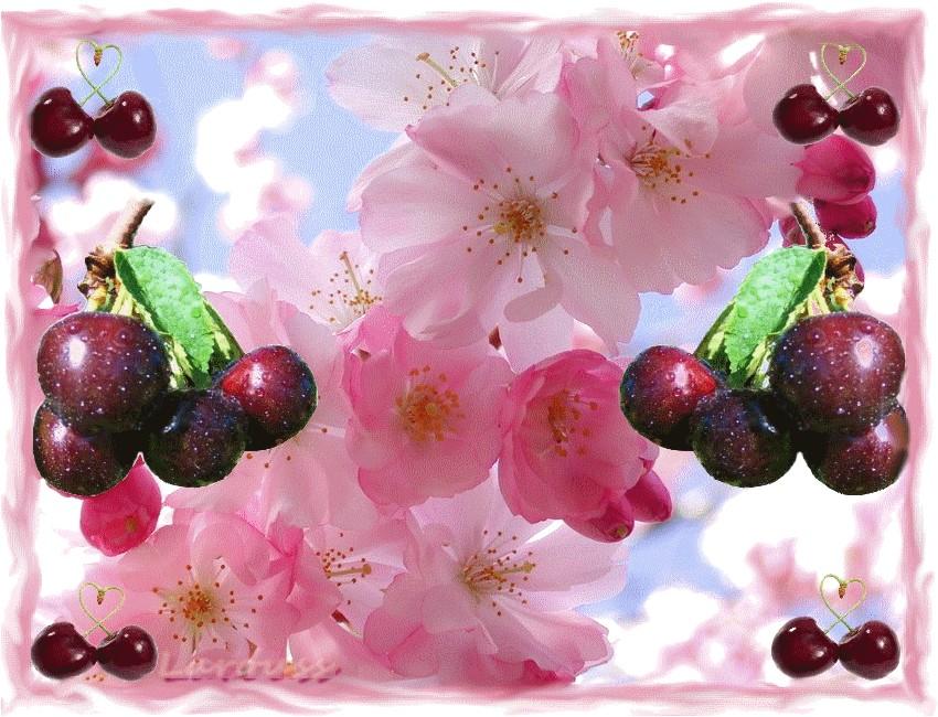 Cerisier fleiri.jpg
